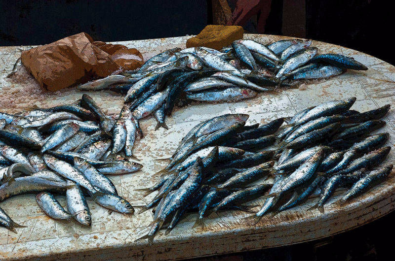 Purchase print of Sprats to catch a Mackerel