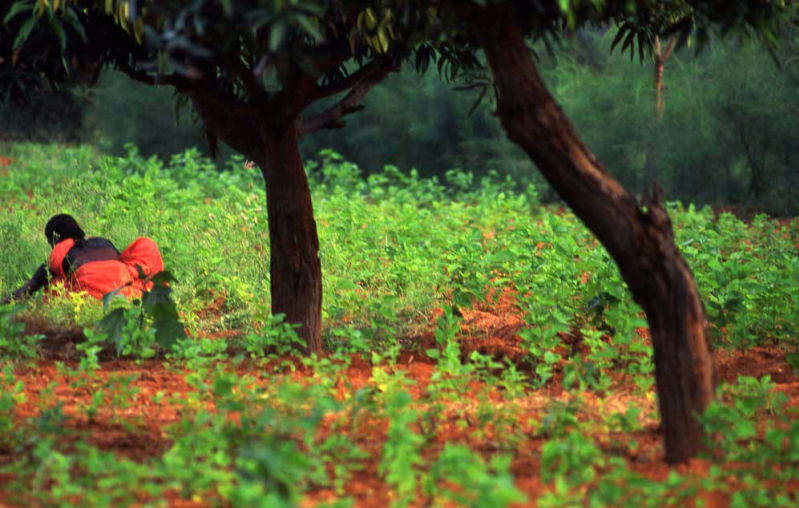 Purchase print of Kerala Tea Picker Two Trees and She